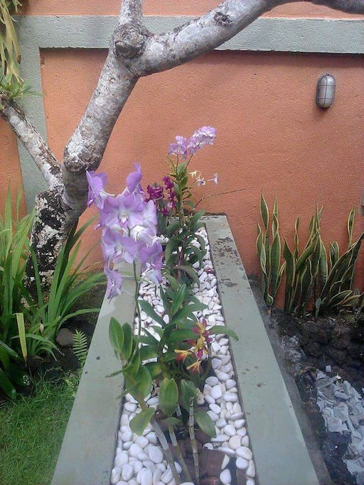 orchid collection in our villa