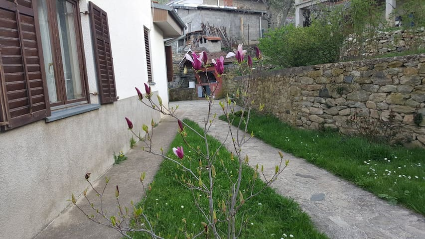 part of our yard, magnolia tree and a barbeque outfit in v. Magarevo, Bitola