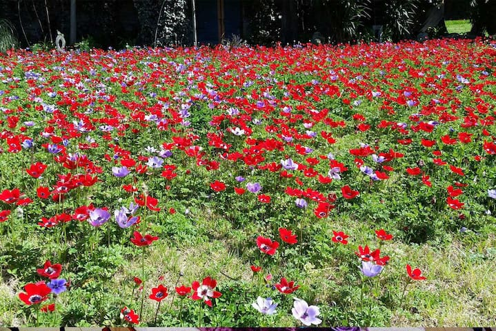 Flowers in spring in Ga'aton