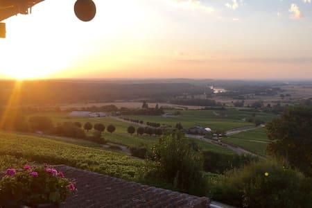 Vue panoramic sur le vignoble - Sancerre