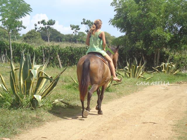 Nature Experience in Casa Abella  Naturaleza Viva - Bahia Honda - Huis