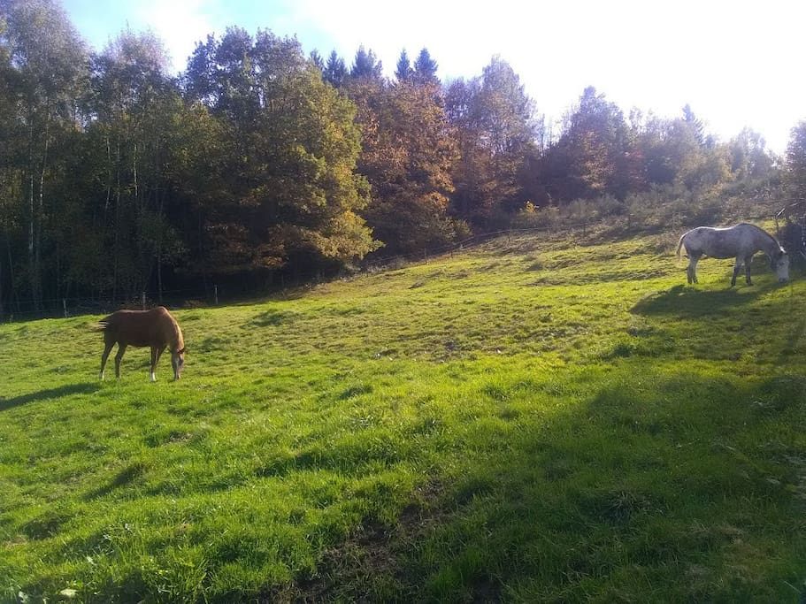 La nature environnante, accueil des cavaliers avec leurs chevaux pour une ou plusieurs nuits