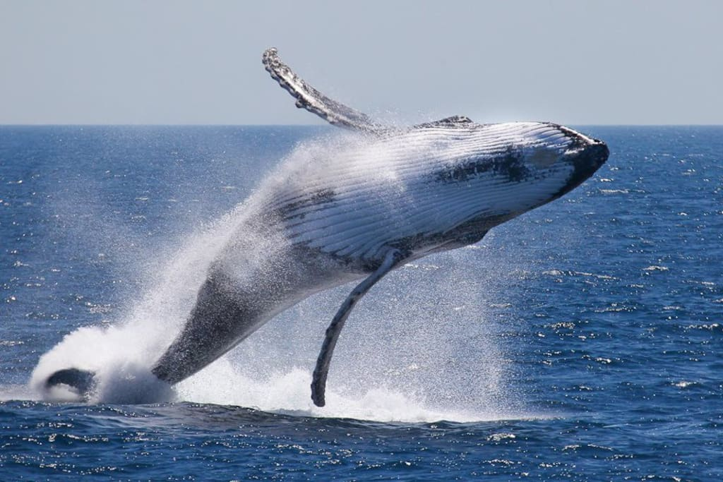 Land based whale watching from June till November!