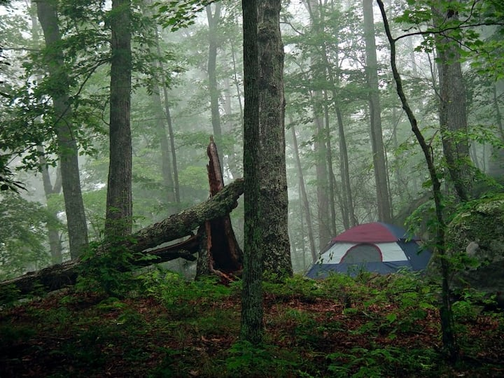 ~Rustic Camping in the Forest at Juniper Rock~