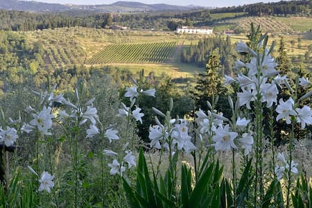 Ancora del Chianti Eco BB & Art Retreat - 2 PERS - Greve in Chianti