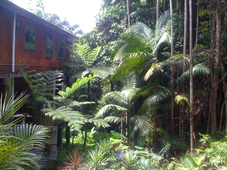 Nestled into the rainforest.