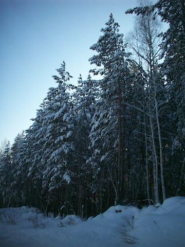 Вид на лес - Новоуральск - Apartemen