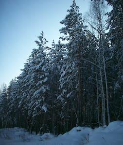 Вид на лес - Новоуральск