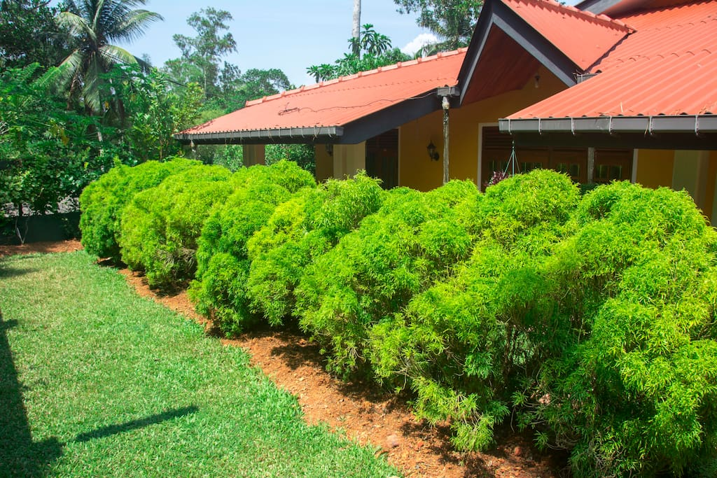 Green bushes shade the sun to keep sthe house cool