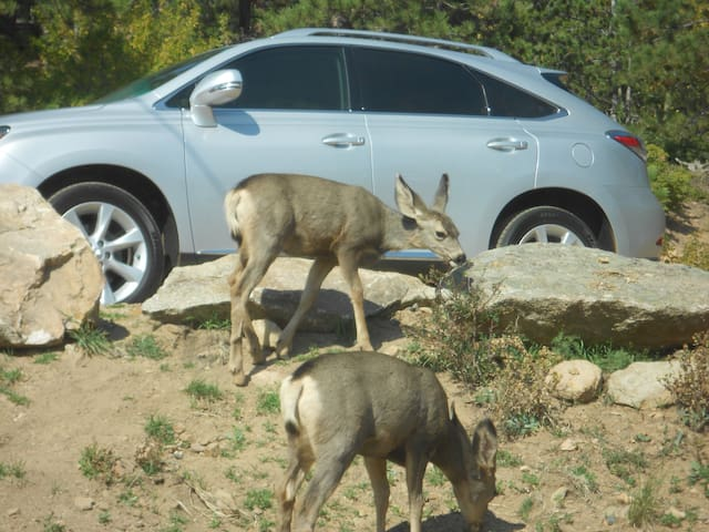 Wildlife on property