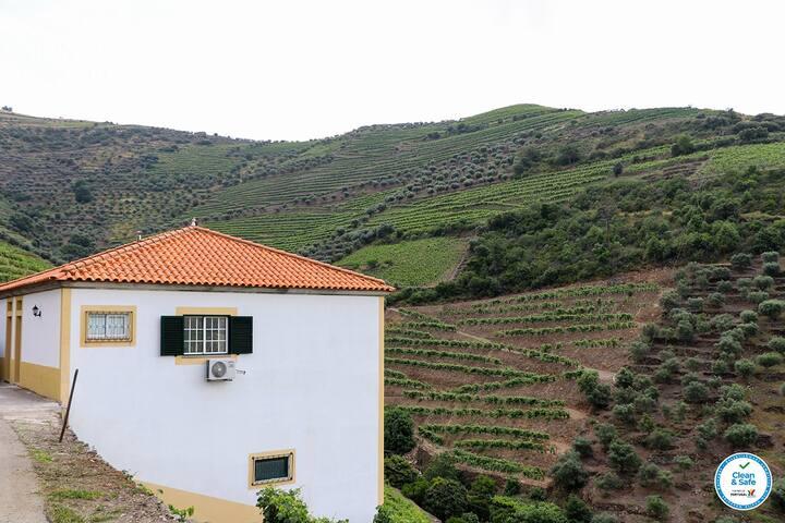 Quinta do Monte Bravo - DOURO VINEYARDS TREE ROOMS
