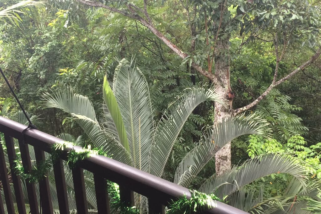Life in the Treetops - Balcony View
