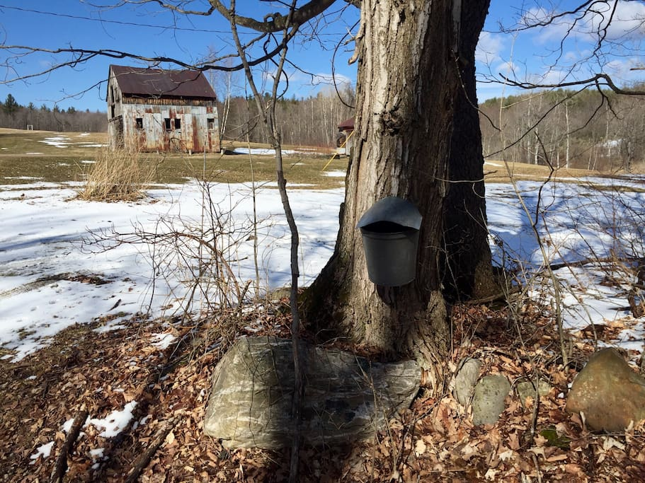 Early Spring is for Maple Sugaring. Come gather some sap with us. Try your hand at making some maple syrup.