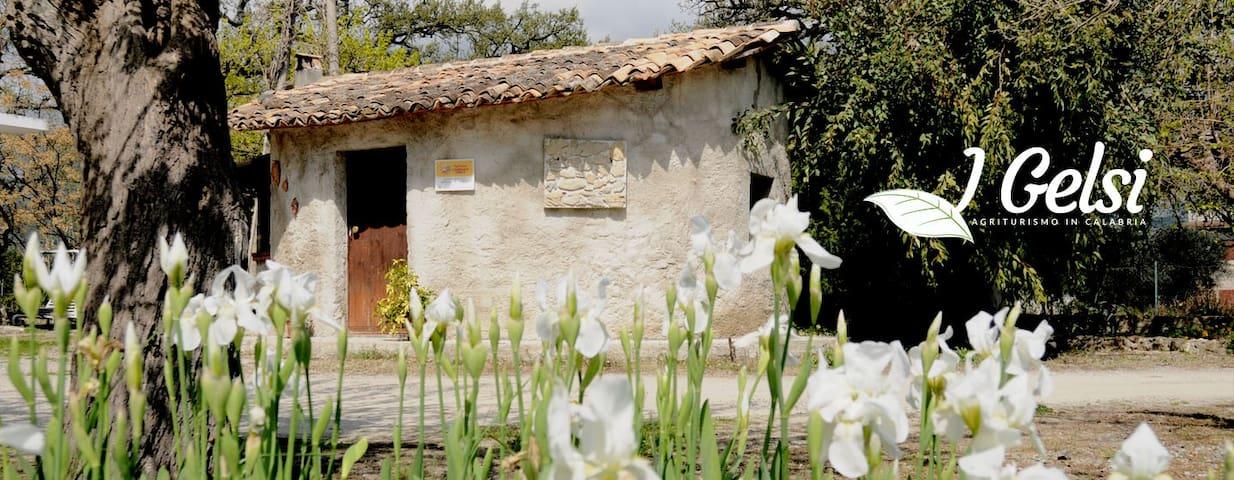 Azienda Agrituristica I GELSI - Francavilla Marittima - House