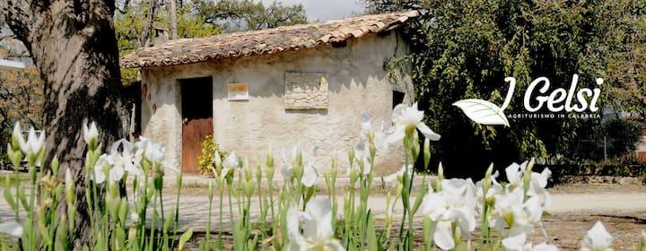 Azienda Agrituristica I GELSI