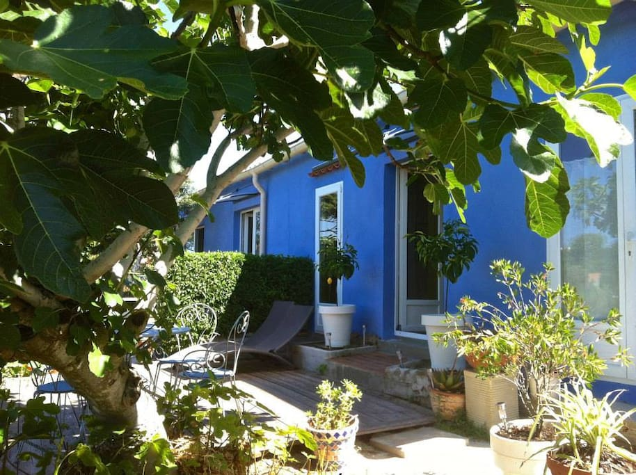 absolument levant la maison bleue houses for rent in