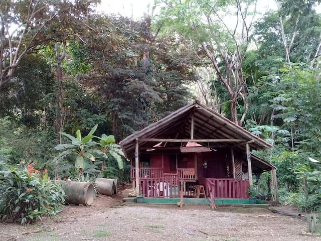 Ana's cabin