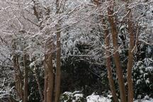 Snowy garden at Balmoral
