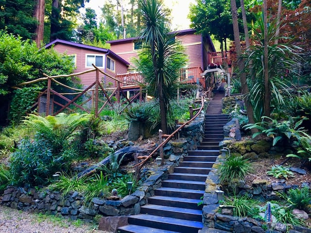 Lagunitas Creek and Redwood Forest Home