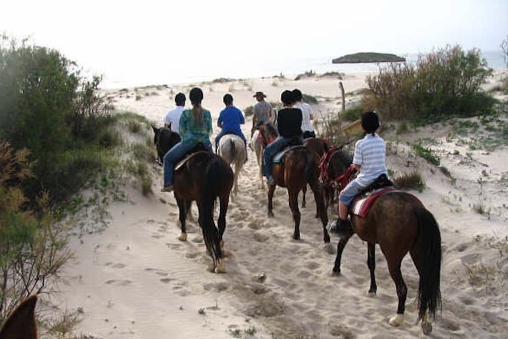 Horse back riding in Dor beach רכיבה על סוסים חוף דור