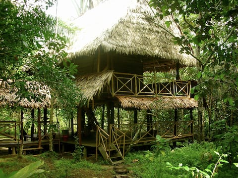 Amazon Natural Reserve Bed&Trees