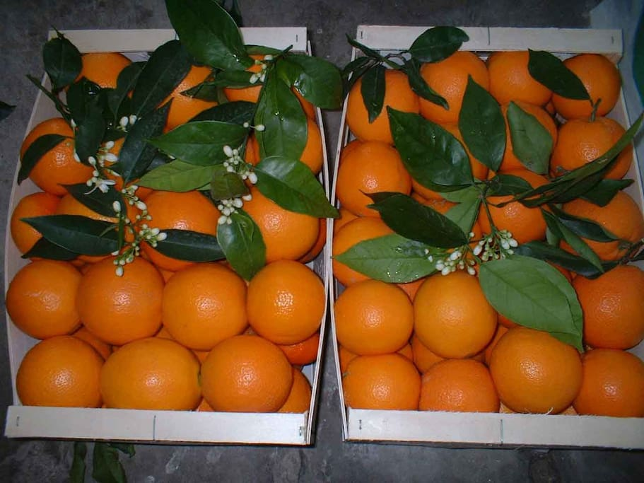 Oranges from my family's orchard