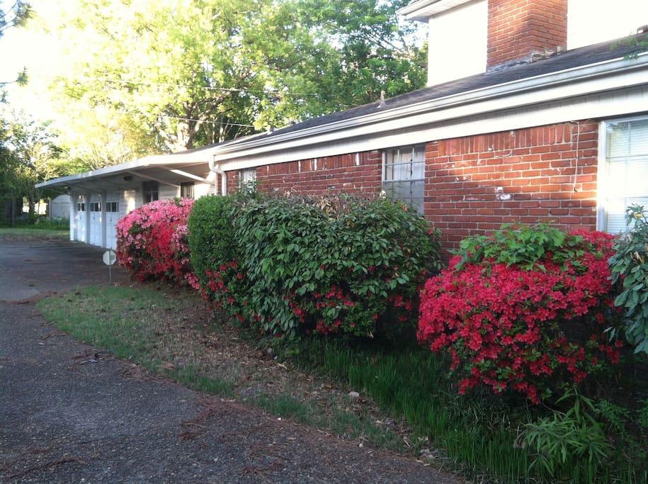 Side azaleas & 3-car garage; first garage door closest to azaleas will be your parking slot