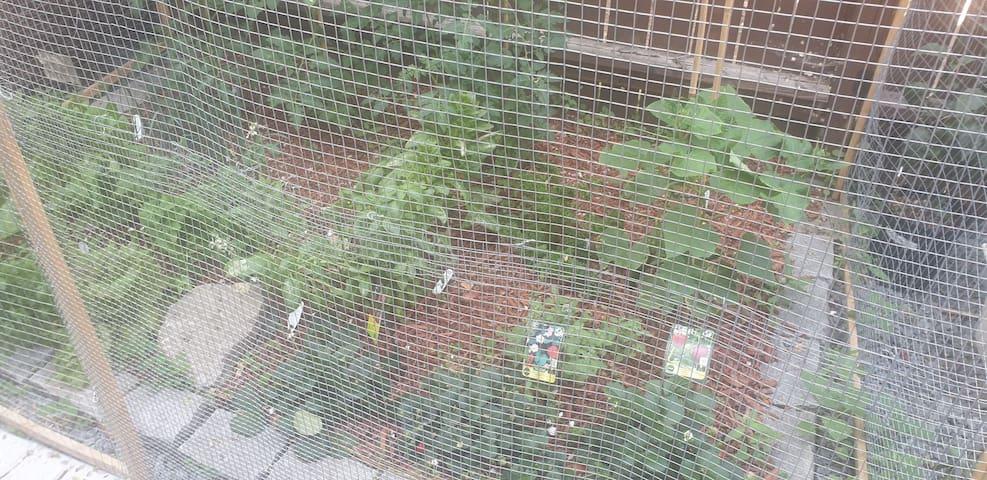 CHAMBRE PRIVÉ clim jardin potager bio