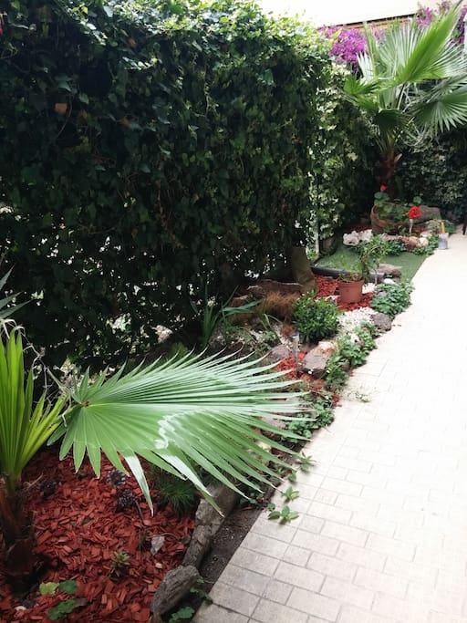 Le jardinet devant la terrasse