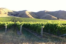 Beautiful Marlborough Vineyards. Choose your own Cellar Doors to visit independently, or catch a tour from Picton (35 mins drive away)