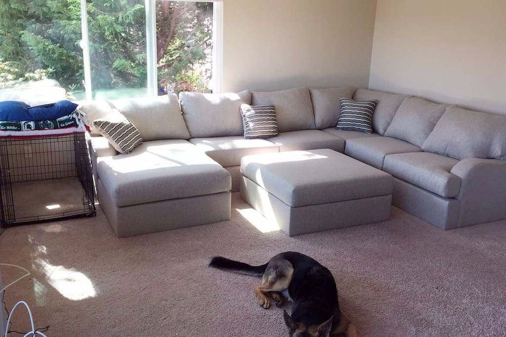 Living Room / the pup