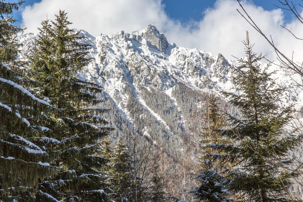 Chamonix cabin nestled in woodland