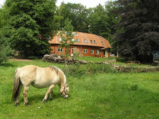 Pension Groenewoud Swalmen - Swalmen - Bed & Breakfast