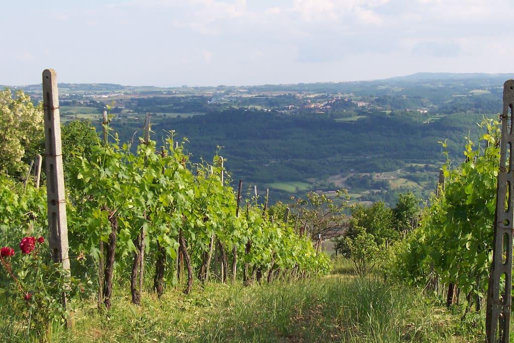 La vista della valle dalla vigna