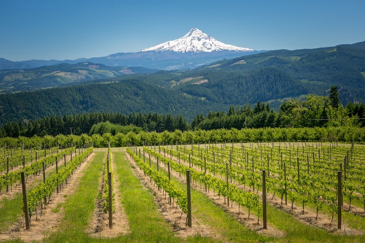 Best View in the Gorge - Mt Hood Barn & Vineyard