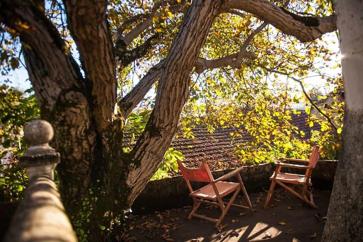 Walnut Farm Q2 - Vila Nova de Monsarros  - Guesthouse