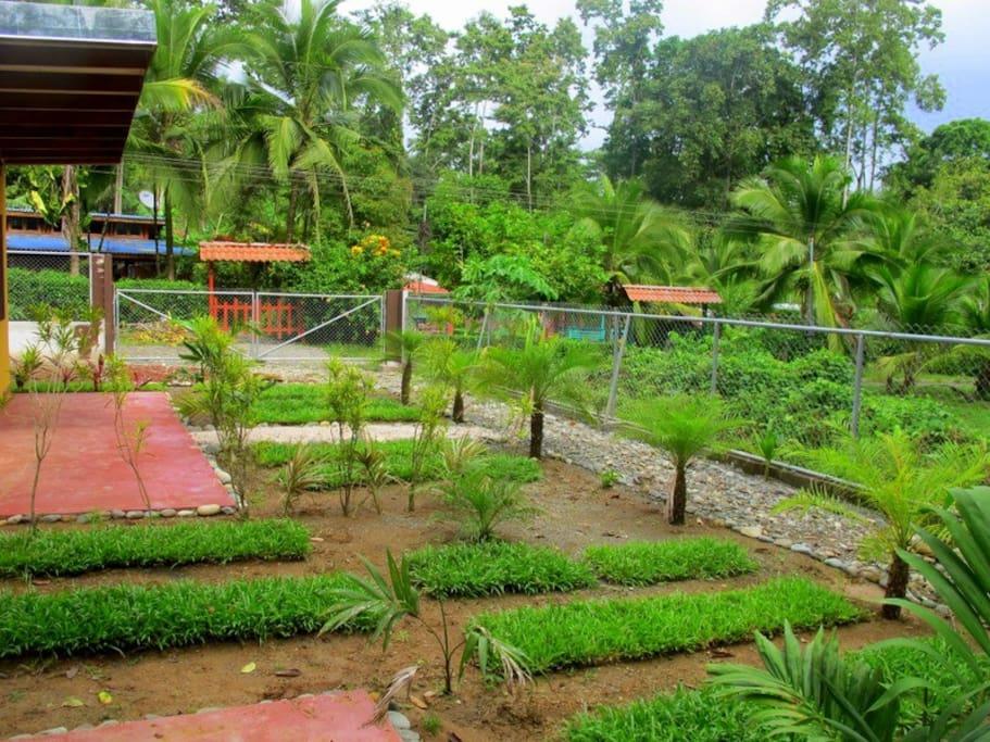 Outside Garden, growing process....