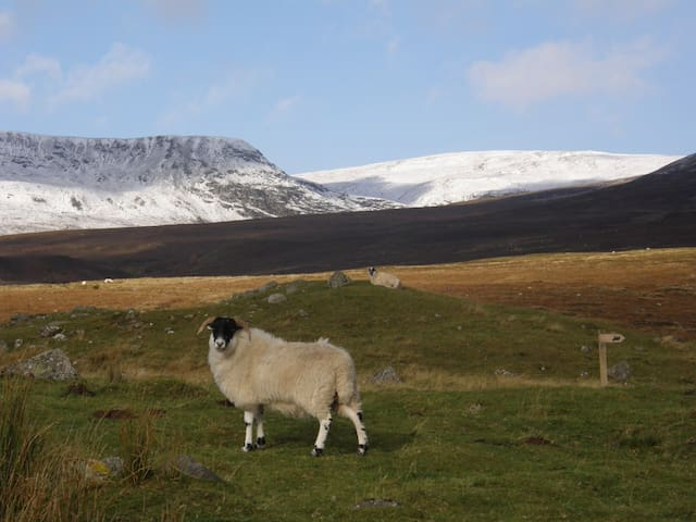 Cottage for couples in Cairngorms - newtonmore - Hus