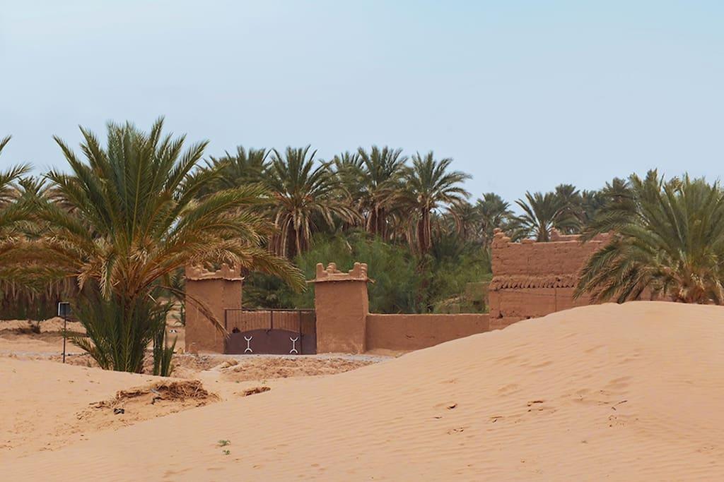 Tigida entre dunes et palmeraie