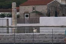 Vista da Casa da Azenha a partir da nascente de Alcabideque, com um ganso em destaque.