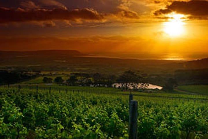 wine farms,