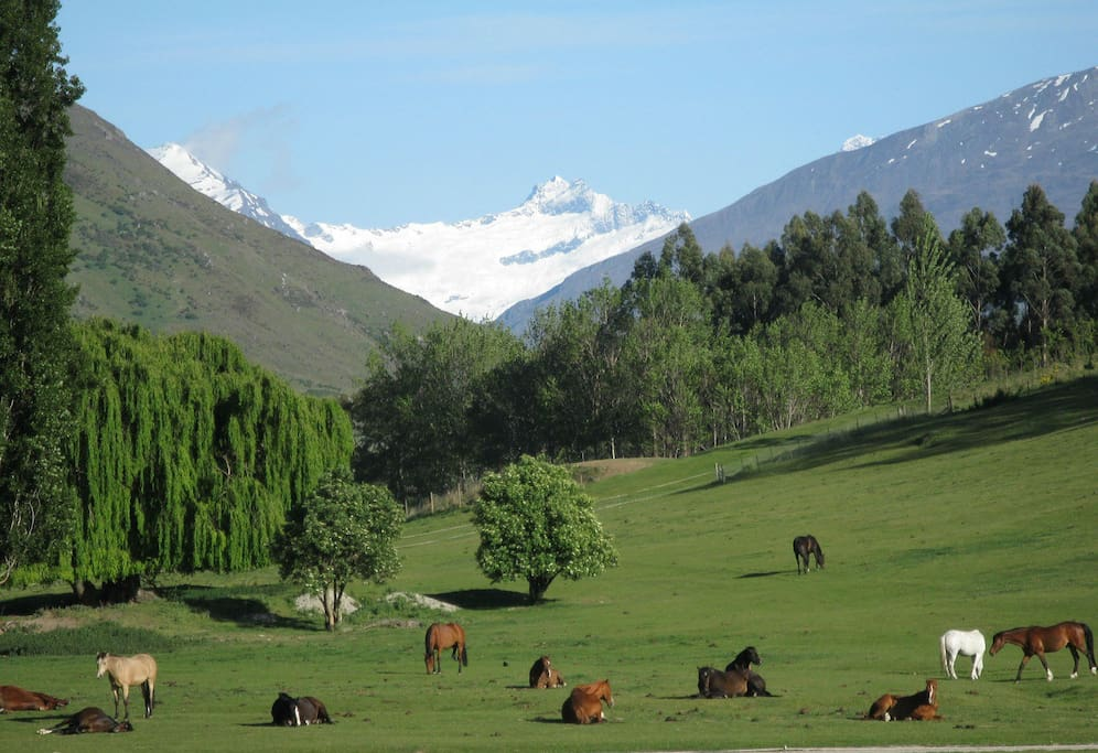 View with horses beside the property