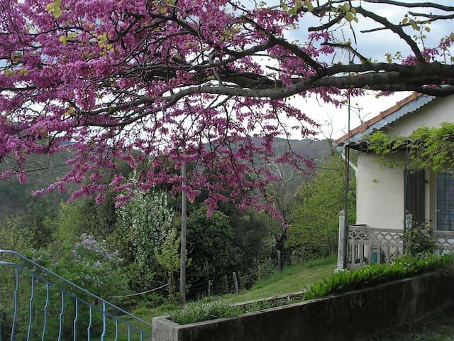 Gite du Pin en Cévennes - Saint-Martin-de-Boubaux - Servicelägenhet