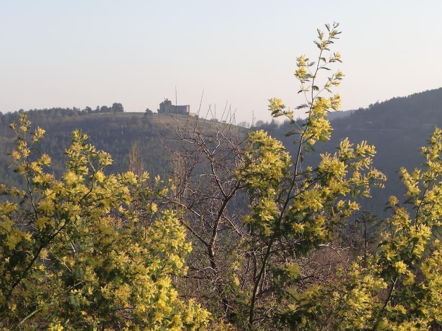 Derrière les mimosas, le château de Portes se dessine...