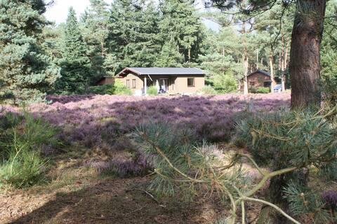 Ferienhaus Veluwe (NL) auf 12 Ha Grundstück