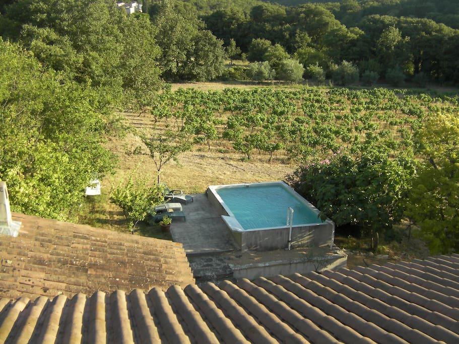 Le bassin-piscine