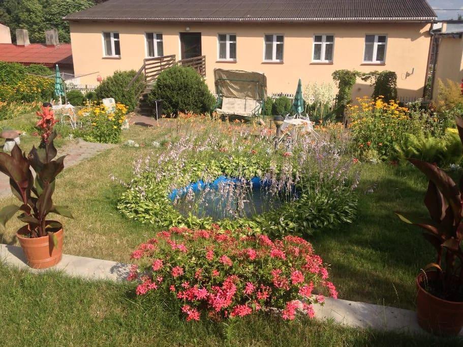 Kwiatki, kwiatki, kwiatki. Sporo ich w moim ogrodzie.