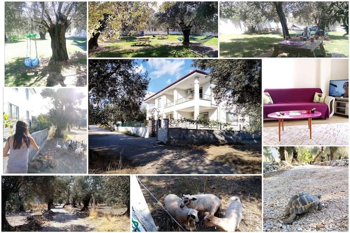 ⭐⭐⭐⭐⭐ Yazduf Apart Villa - Aile, Deniz, Huzur,Doğa