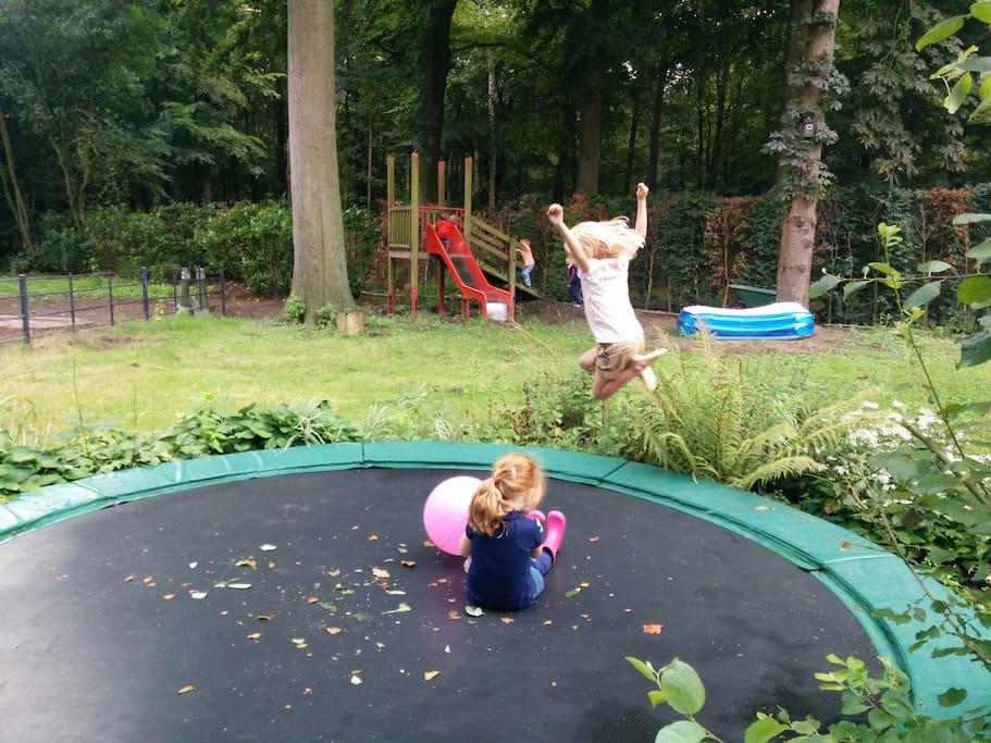 backyard - trampoline
