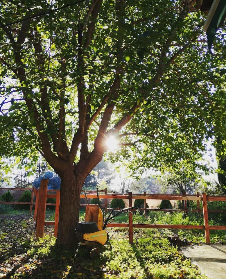Huerta ecológica / Organic orchard